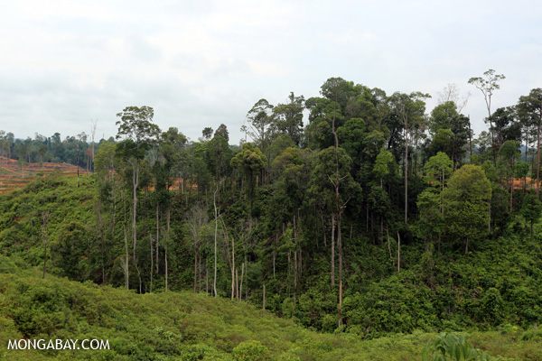 Forest fragment due to palm oil