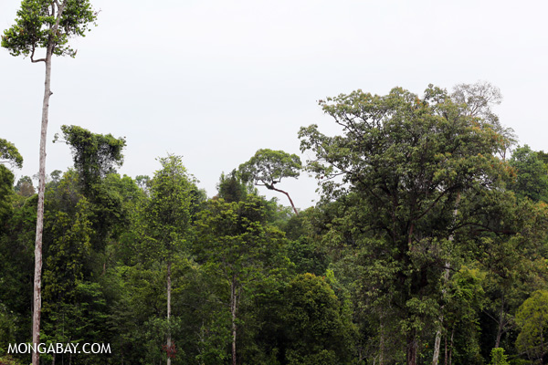Rainforest in the Leuser ecosystem