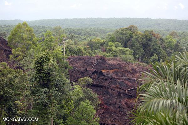 Slash-and-burned forest