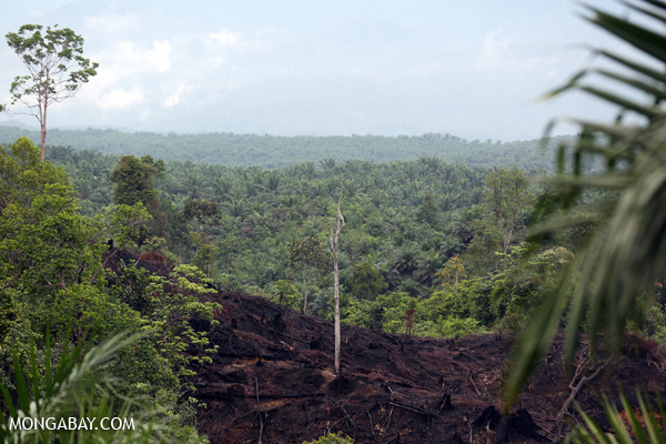 Slash-and-burned forest in Aceh Sumatra, Indonesia. Photo credit: Rhett Butler.