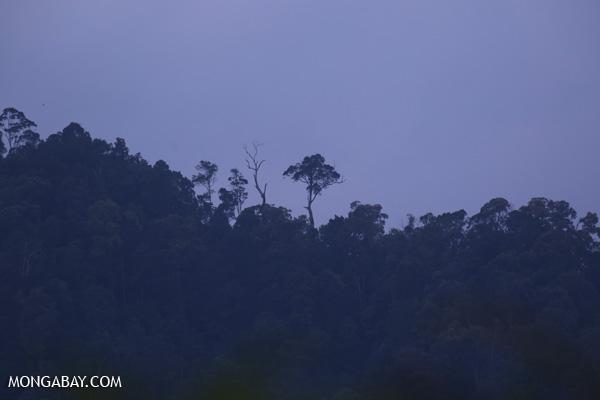 Gunung Leuser ecosystem