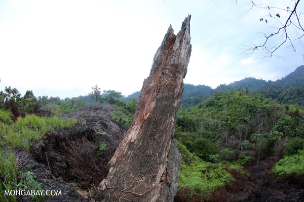 Burned tree in a deforested area