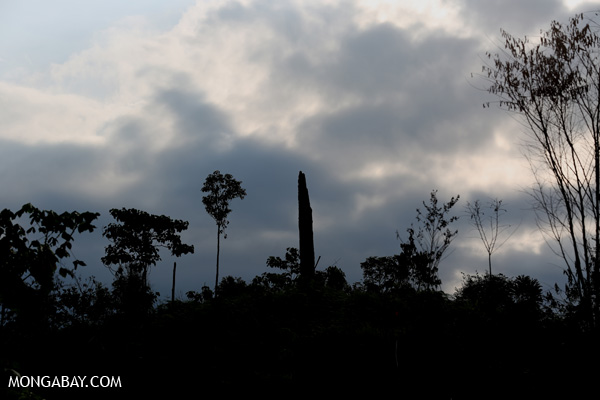 Slash-and-burn in Aceh