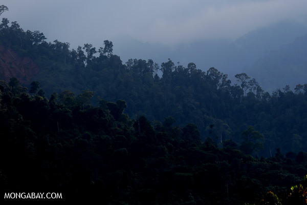 Rainforest in the Gunung Leuser ecosystem