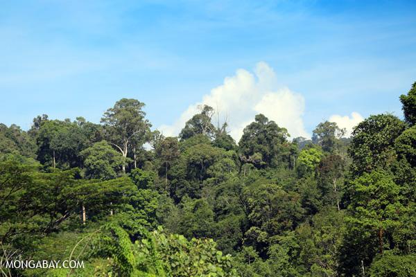 Gunung Leuser rainforest