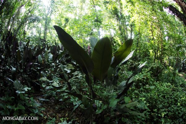 Understory vegetation