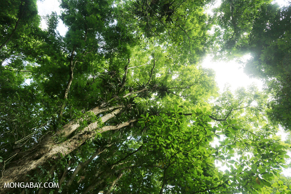 Epiphytes in the rainforest canopy