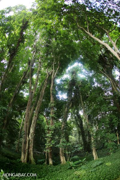 Forest in Stasiun Karantina orangutan batumbelin - Sibolangit