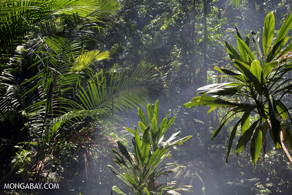 Smoke rising through the rainforest
