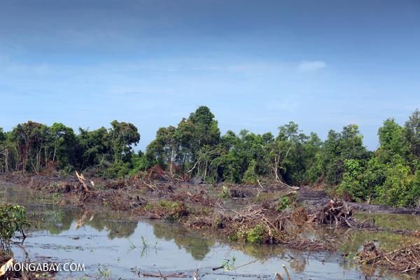 Newly cleared peatland in Riau