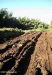 Tire tracks left in deep mud on Mount Kenya