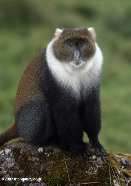 Monkeys use field scientists as human shields against predators