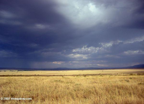 Grassland in Kenya