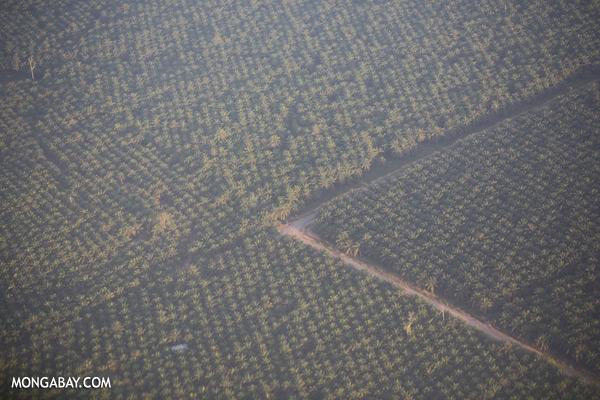 Oil palm in Tawau [sabah_aerial_3114]