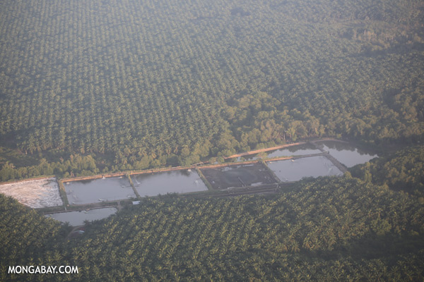 Shrimp ponds and oil palm in Tawau