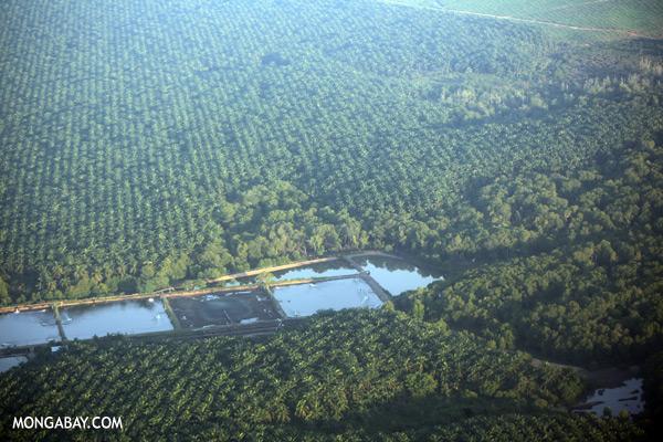 Shrimp ponds and oil palm in Tawau [sabah_aerial_3116]