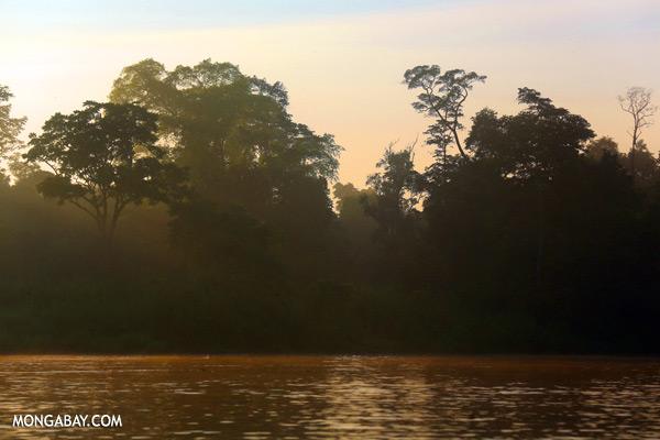 Kinabatangan river at sunrise [sabah_kinabatangan_0211]