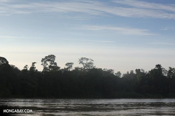 Kinabatangan river at sunrise [sabah_kinabatangan_0220]