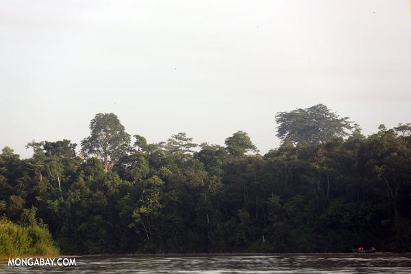 Ecotourists in the Kinabatangan river [sabah_kinabatangan_0245]