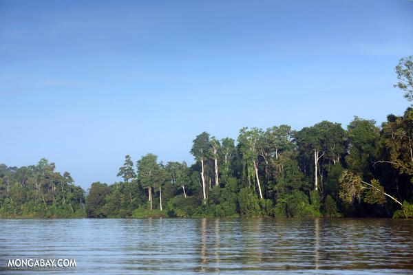 Kinabatangan river [sabah_kinabatangan_0263]