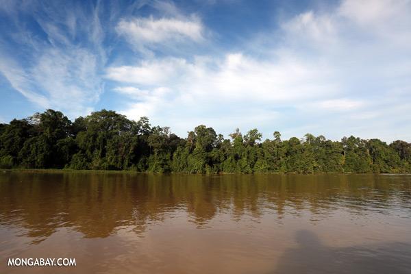 Kinabatangan river [sabah_kinabatangan_0434]