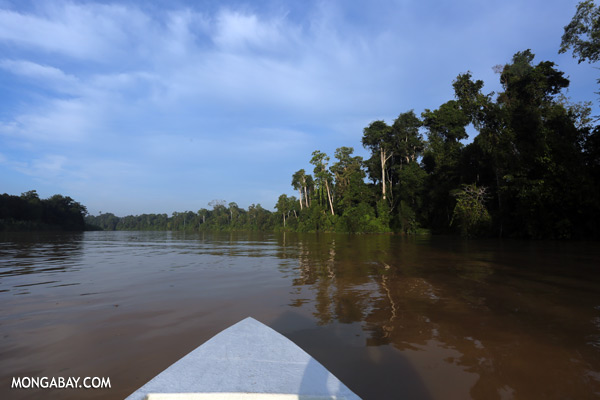 Kinabatangan river [sabah_kinabatangan_0450]