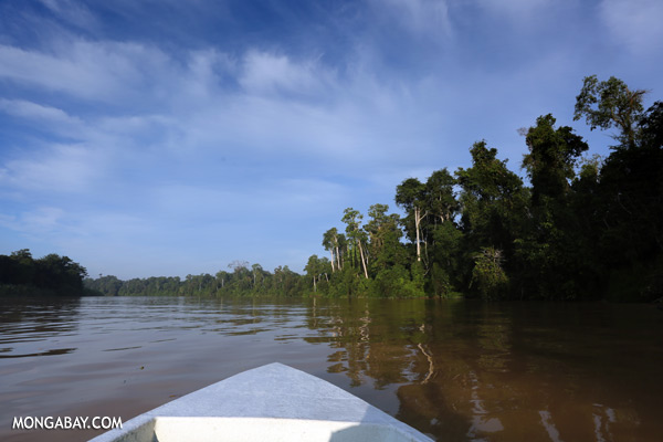 Kinabatangan river [sabah_kinabatangan_0452]