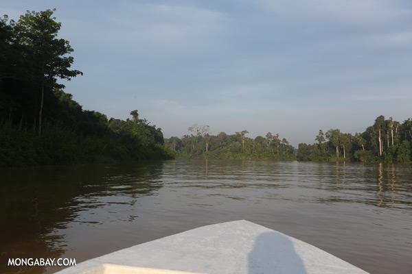 Kinabatangan river [sabah_kinabatangan_0459]