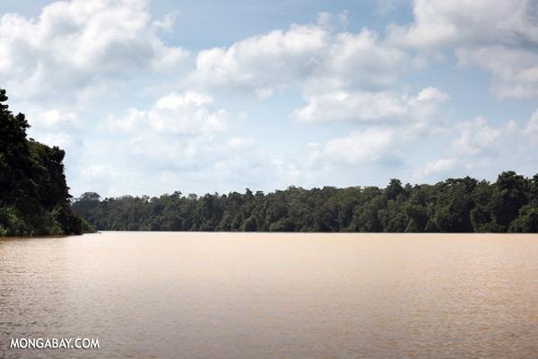 Kinabatangan river [sabah_kinabatangan_0485]