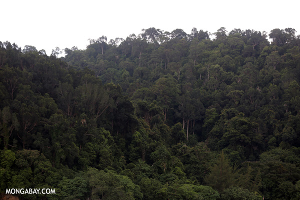 Rainforest on Pulau Gaya