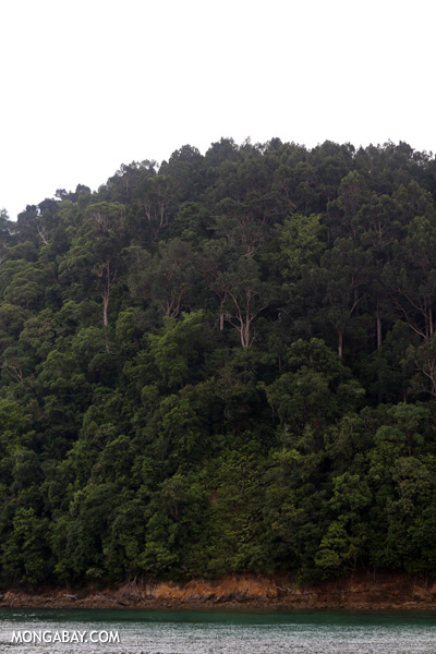 Rainforest on Pulau Gaya [sabah_sapi_island_0005]