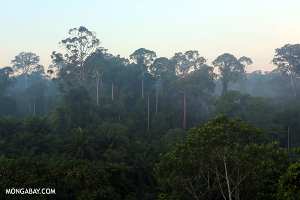 Rainforest and an oil palm plantation in Sabah [sabah_sepilok_0060]