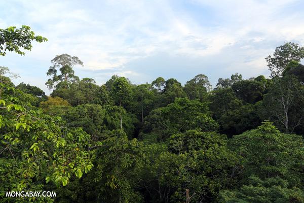 Sepilok rainforest [sabah_sepilok_0275]