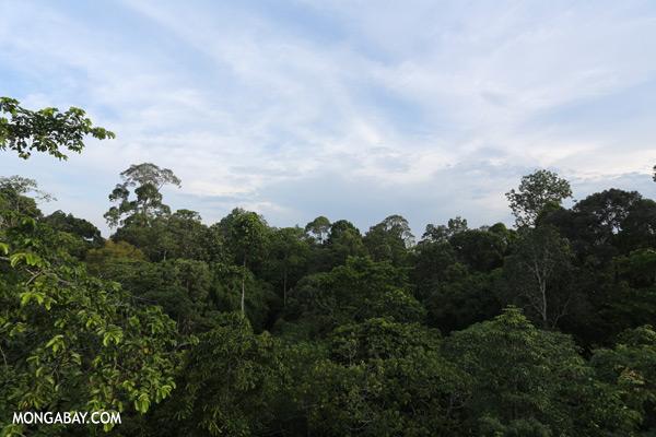 Sepilok rainforest [sabah_sepilok_0282]