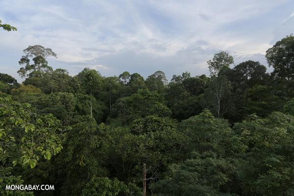 Sepilok rainforest [sabah_sepilok_0284]