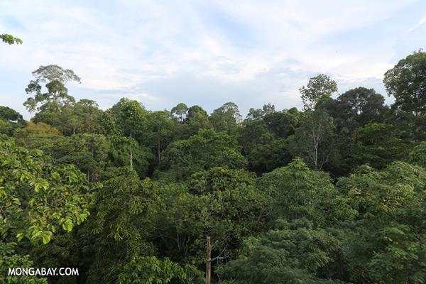 Sepilok rainforest [sabah_sepilok_0287]