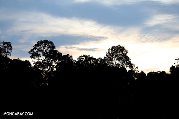 Sepilok rainforest [sabah_sepilok_0342]
