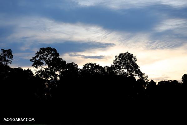 Sepilok rainforest [sabah_sepilok_0344]