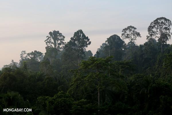 Oil palm plantation and rainforest border [sabah_sepilok_0711]