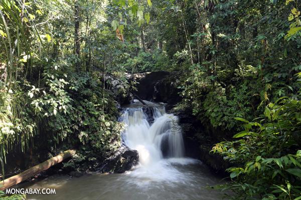 Rainforest waterfall [sabah_tawau_0008]