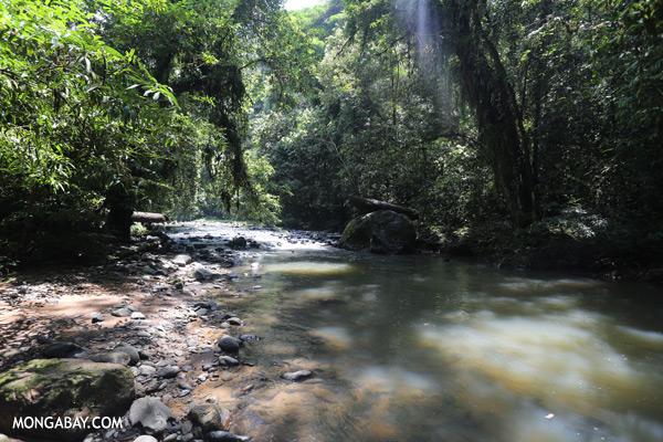 Rainforest creek [sabah_tawau_0030]