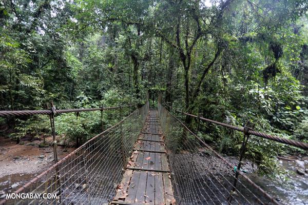 Rainforest bridge [sabah_tawau_0034]