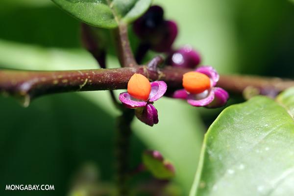 Orange and purple flower [sabah_tawau_0301]