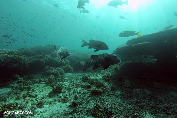 Coralscape in Sabah [sabah_underwater_0031]
