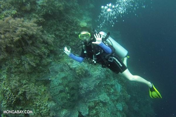 Sea turtle [sabah_underwater_0046]