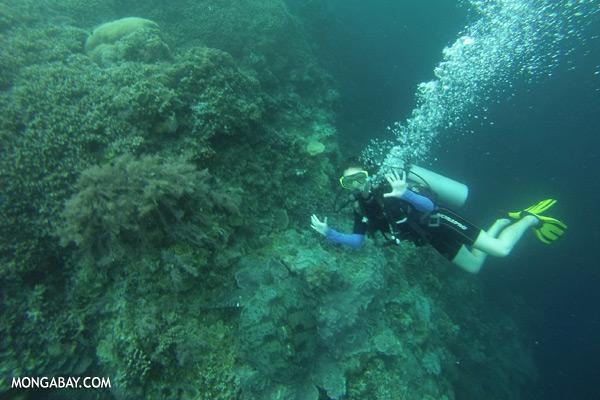 Sea turtle [sabah_underwater_0047]