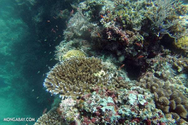 Undersea life in Sabah [sabah_underwater_0206]