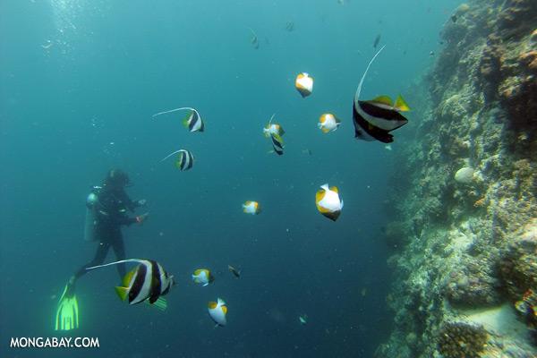 Undersea life in Sabah [sabah_underwater_0215]