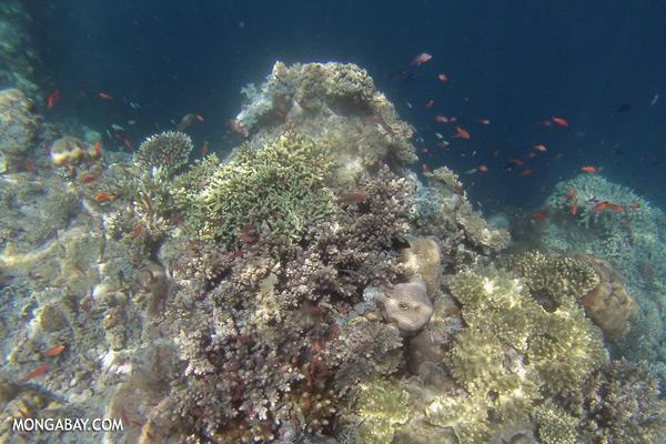 Undersea life in Sabah [sabah_underwater_0243]