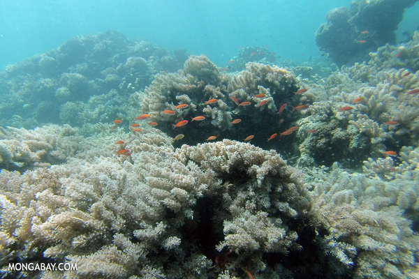 Undersea life in the Coral Triangle